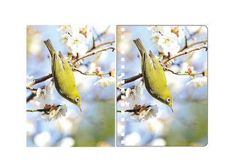 Κίνα A5 3D Lenticular Spiral PET Notebook Covers With Lovely Birds Images προμηθευτής